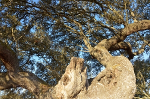 8 tree deer_DSC6409 copy
