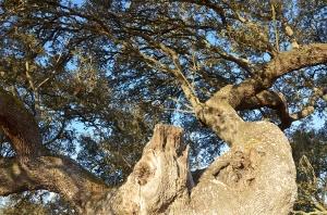 3 1200 tree deer_DSC6409 copy 2