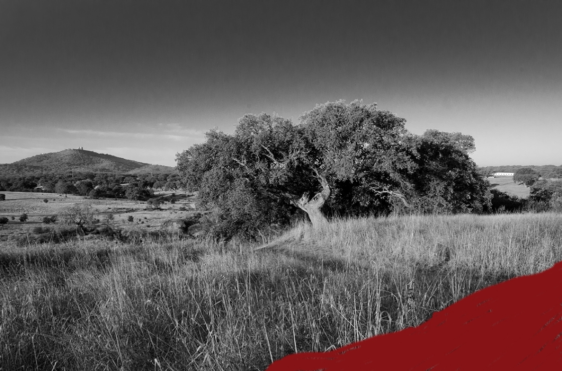 B 72 b and w red Portugal landscape--3