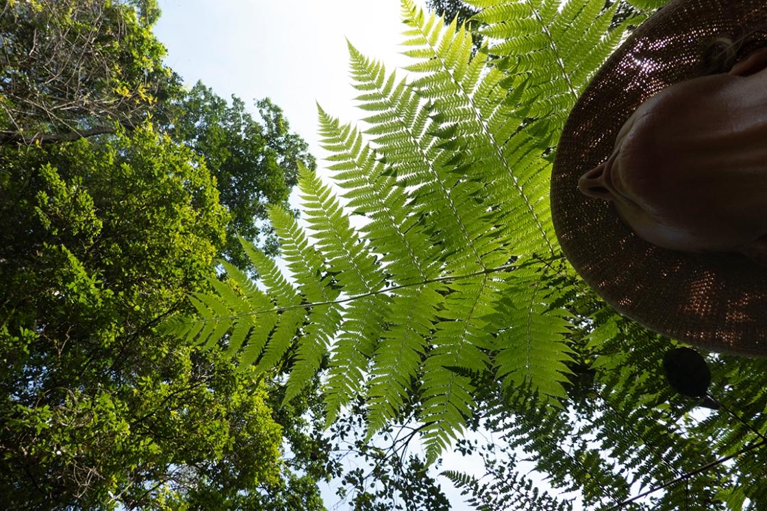 72 neck fern DSC00370 copy