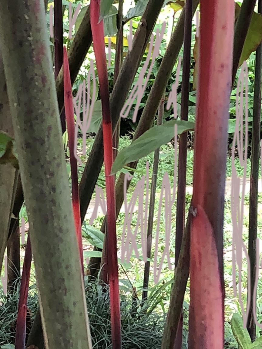 72 nude garden IMG_8711